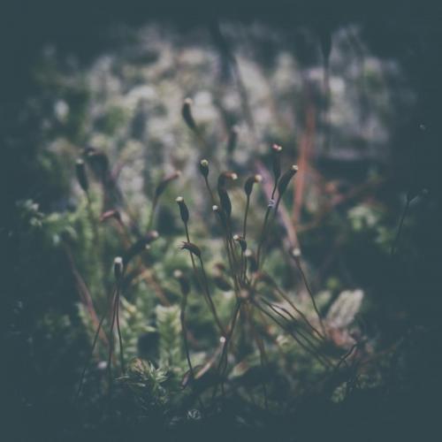 Haiku Fotografie